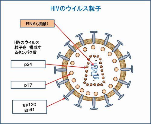 HIV構成